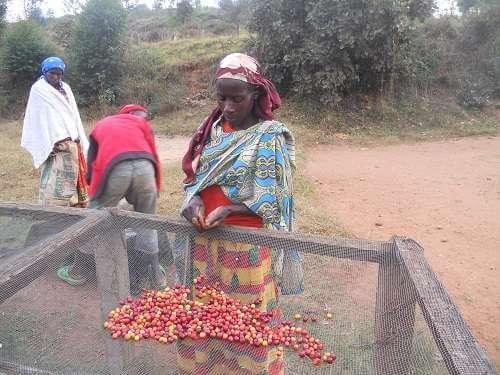 cafe du rwanda 2.jpg