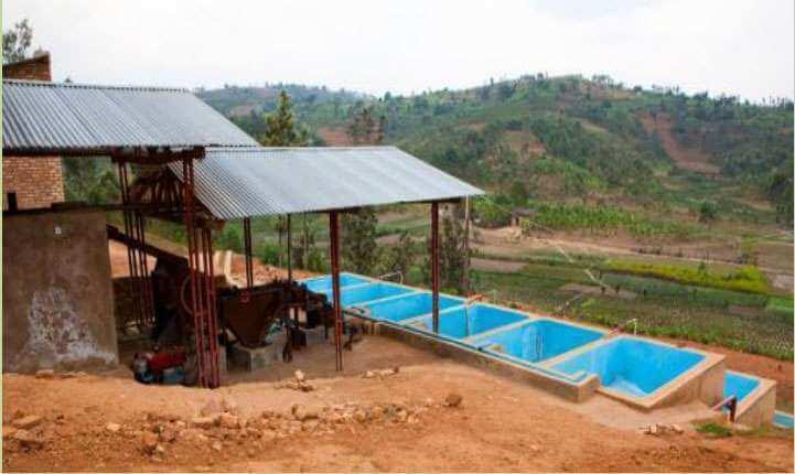 cafe en grain du burundi