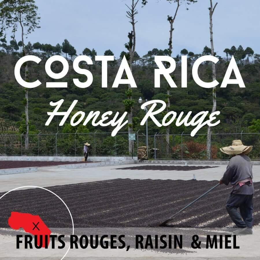 Café en grain COSTA RICA - Honey Rouge - Plantation Los Encinos