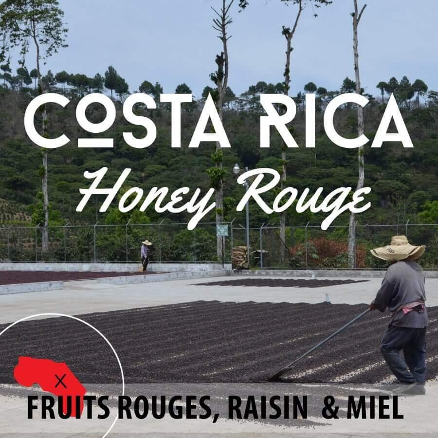 Café en grain COSTA RICA - Honey Rouge - Plantation Los Encinos