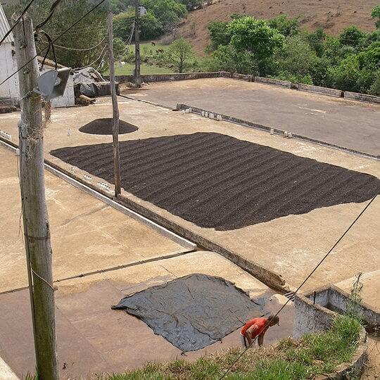 cafe grain bio bresil saquarema minas gerais terroir  2