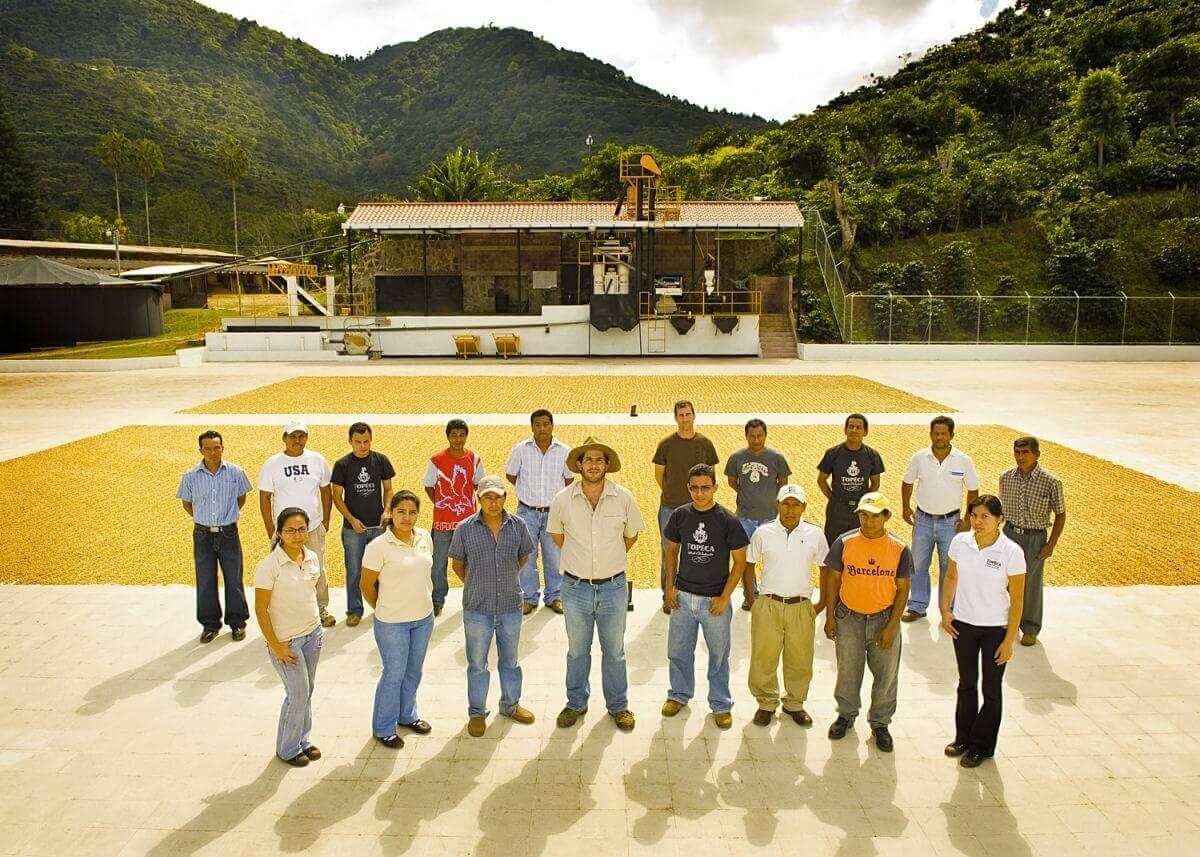 cafe grain salvador ilamatepec ayutepeque pacamara  2