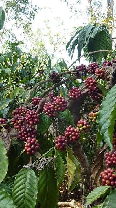 cafe inde malabar2