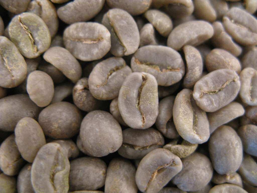 Café vert : COSTA RICA - SANTA CRUZ - 1 KG