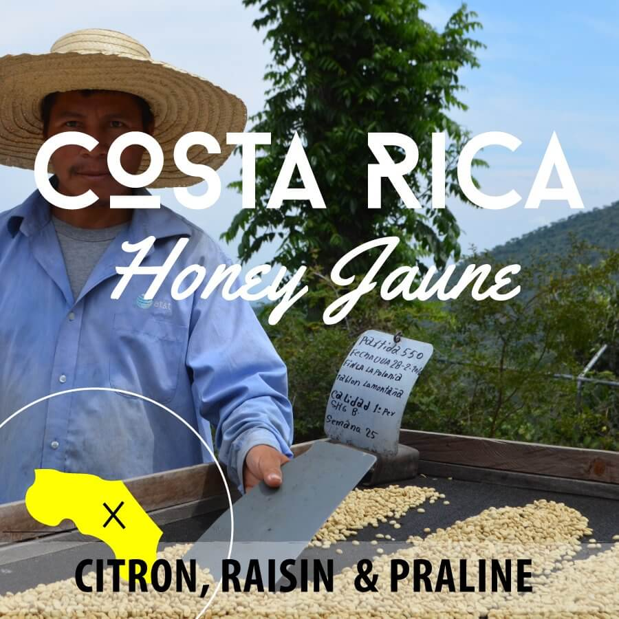 Café en grain COSTA RICA - Honey Jaune - Plantation Los Encinos