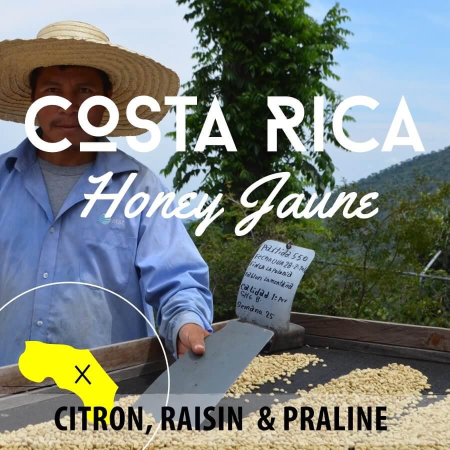 Café en grain COSTA RICA - Honey Jaune - Plantation Los Encinos