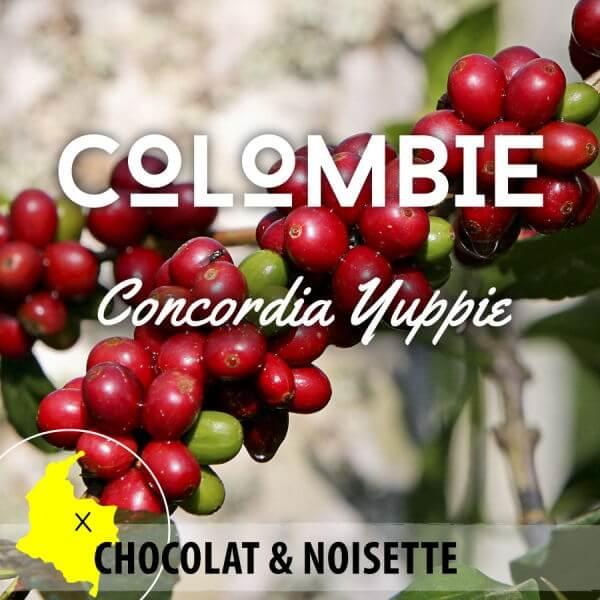 Café COLOMBIE Antioquia - Concordia - YUPPIE - café moulu