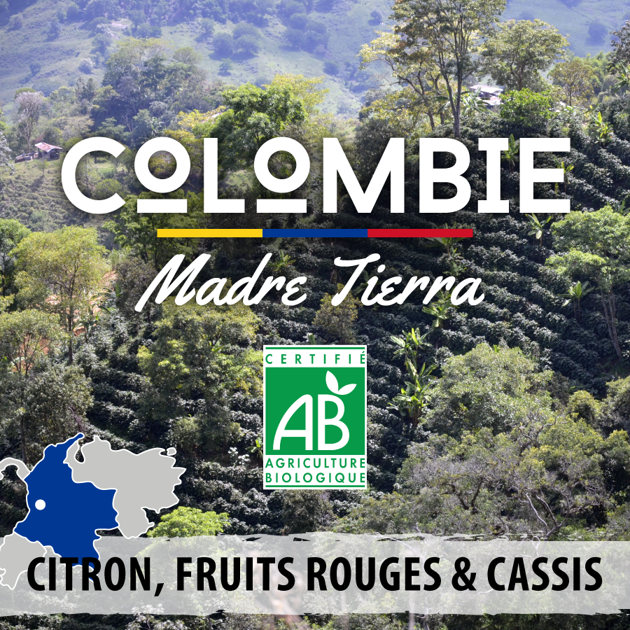 Café en grain BIO Colombie - Madre Tierra