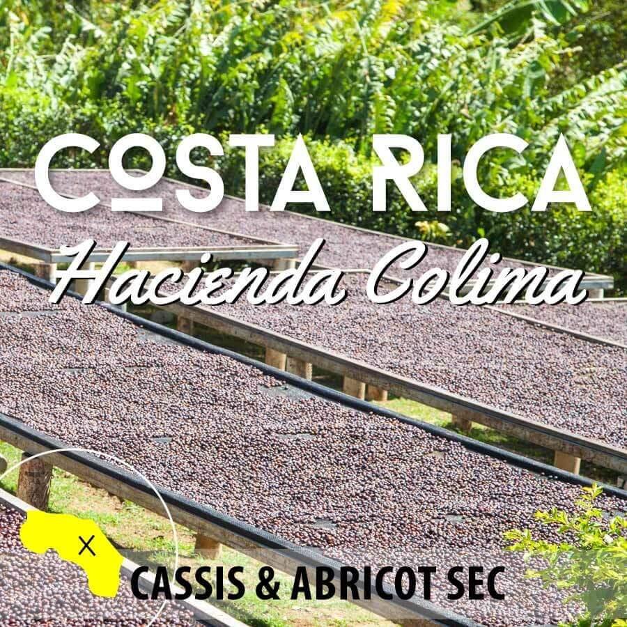 Café en grain Costa Rica - Hacienda Colima