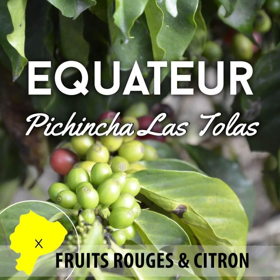 Café en grain EQUATEUR Pichincha - Las Tolas - Bourbon Rouge lavé