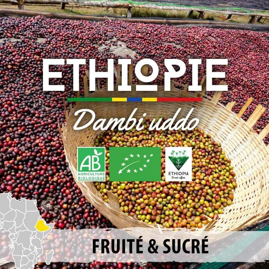 ethiopie bio  guji dambi uddo forest coffee