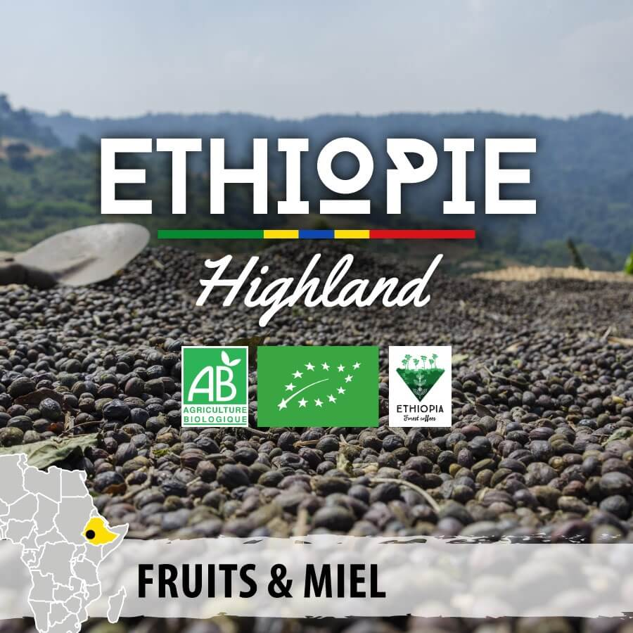 ethiopie highland wallagga forest coffee