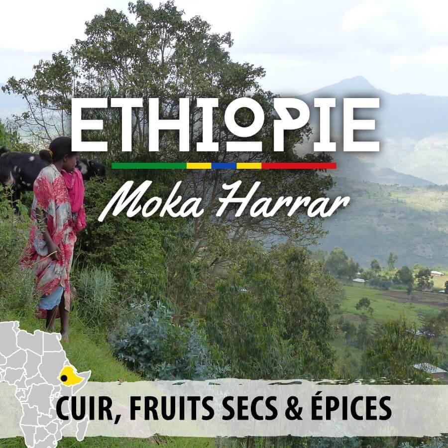 ethiopie moka harrar compresse