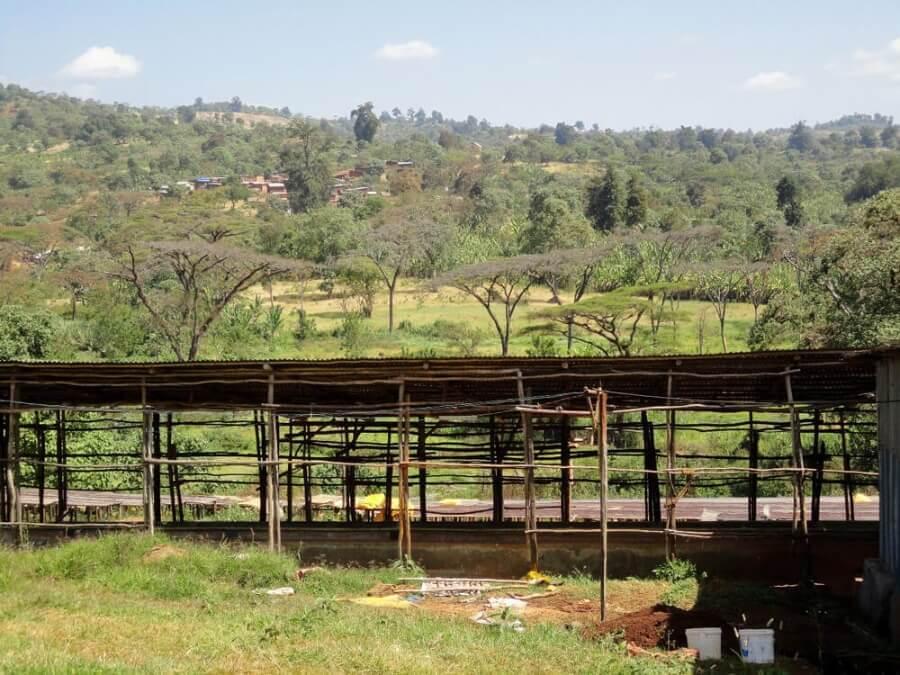 ethiopie qararo guji highlands dambi uddo  1