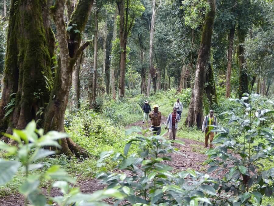 ethiopie qararo guji highlands dambi uddo  8