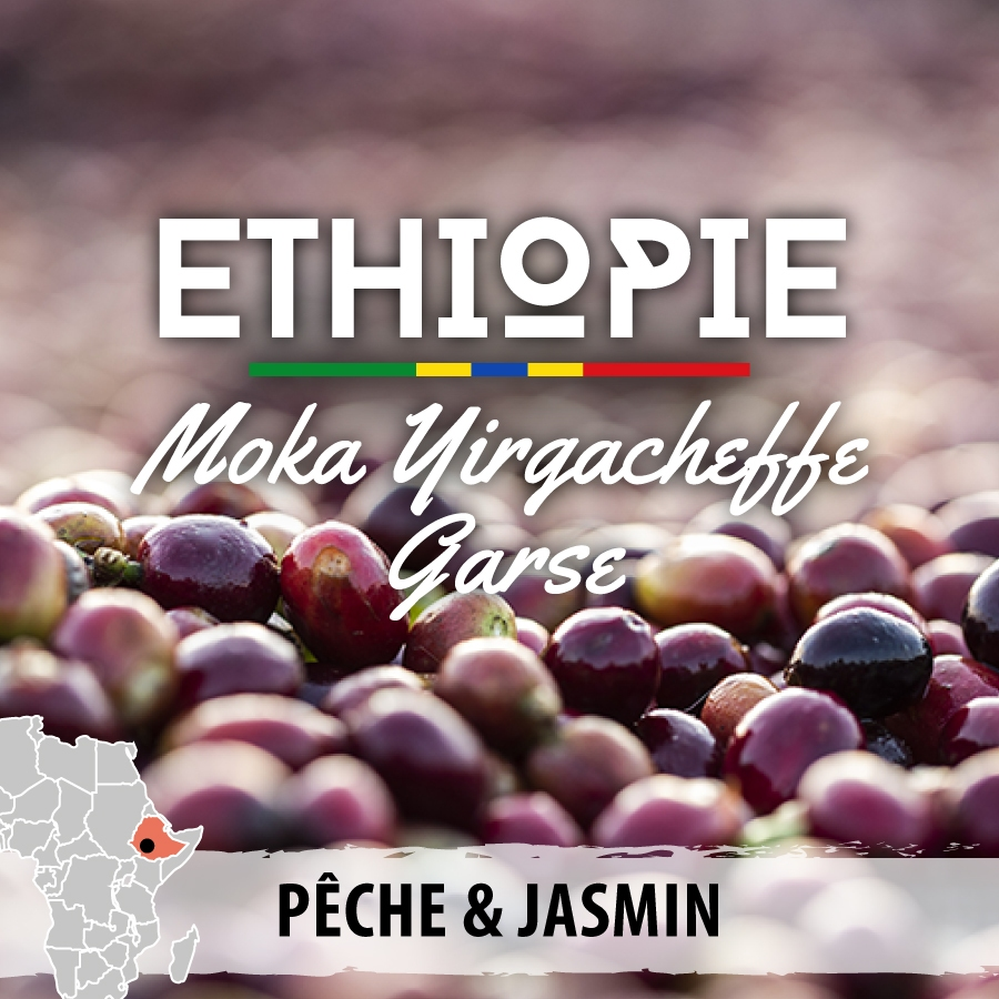 ethiopie yirgacheffe garse