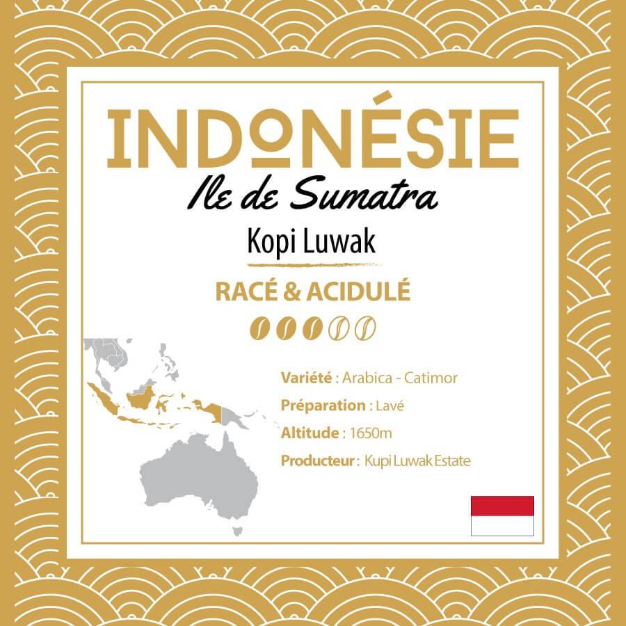 Café INDONÉSIE - Ile de Sumatra - Kopi Luwak - café moulu