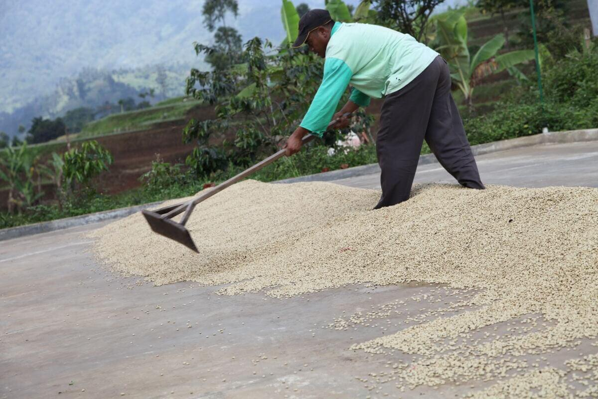 indonesie java sunda radiophare klasik beans nature g1  10