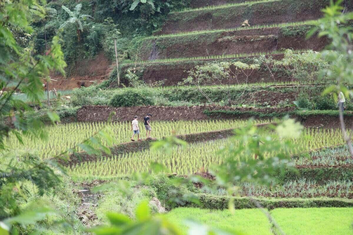 indonesie java sunda radiophare klasik beans nature g1  2