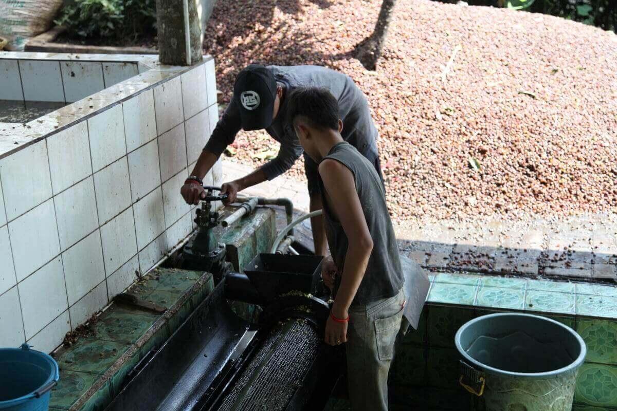 indonesie java sunda radiophare klasik beans nature g1  4