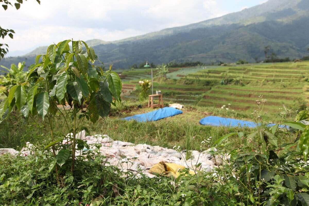 indonesie java sunda radiophare klasik beans nature g1  5