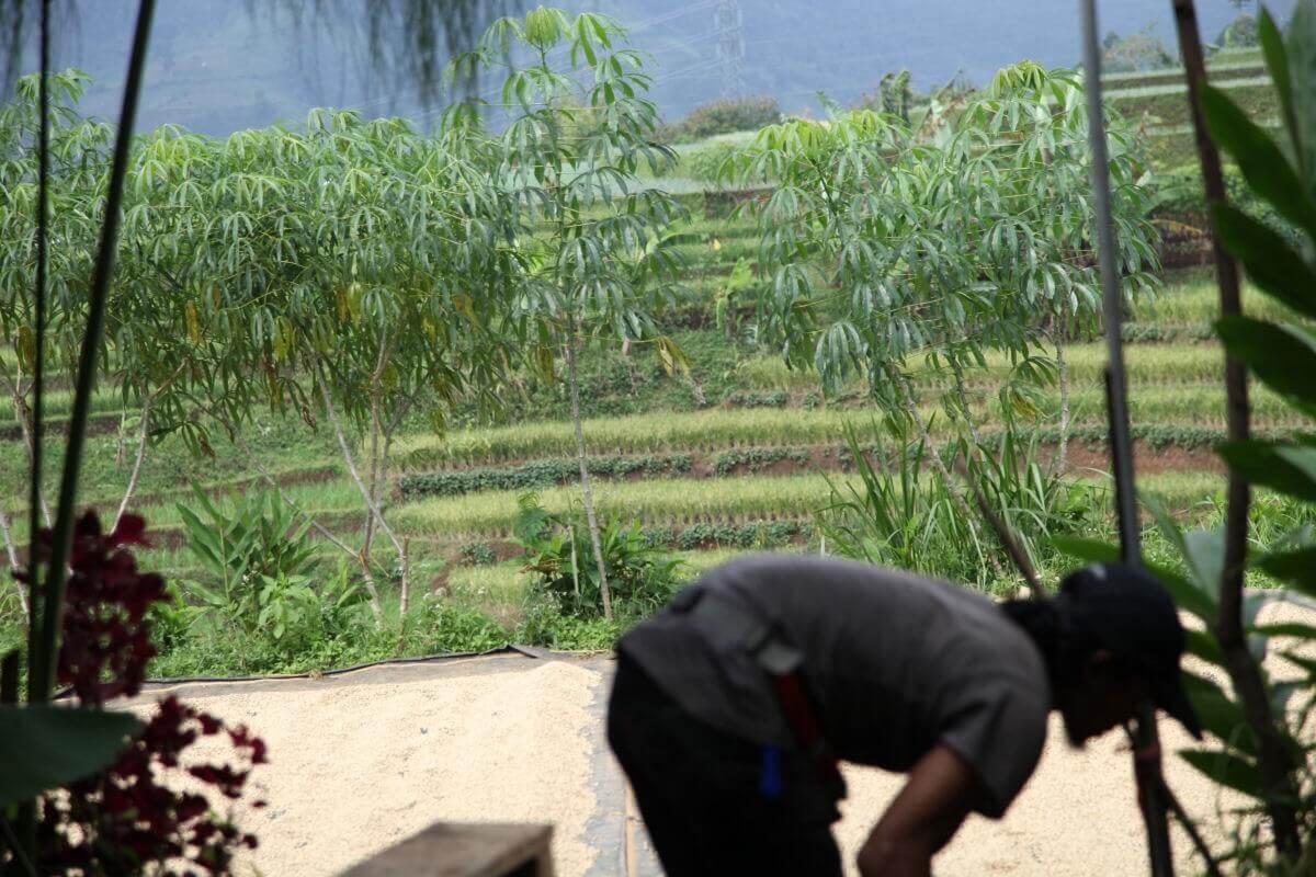 indonesie java sunda radiophare klasik beans nature g1  6