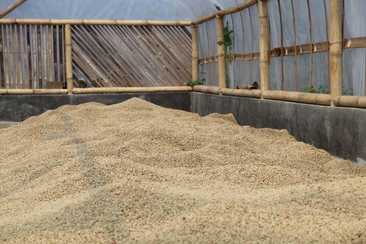 indonesie java sunda radiophare klasik beans nature g1  7