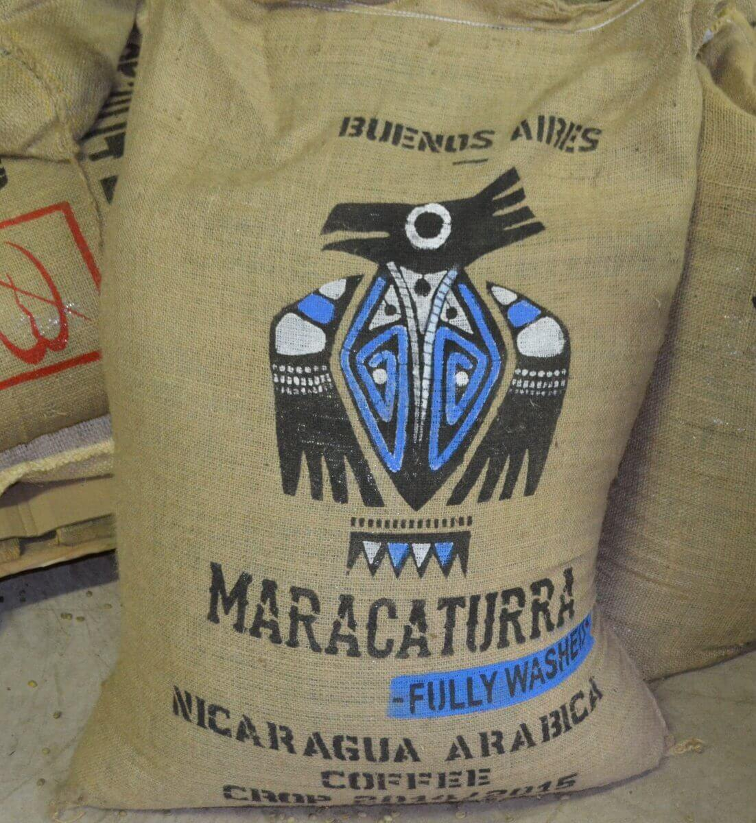 maracaturra dipilto nicaragua cafe terroir le sac