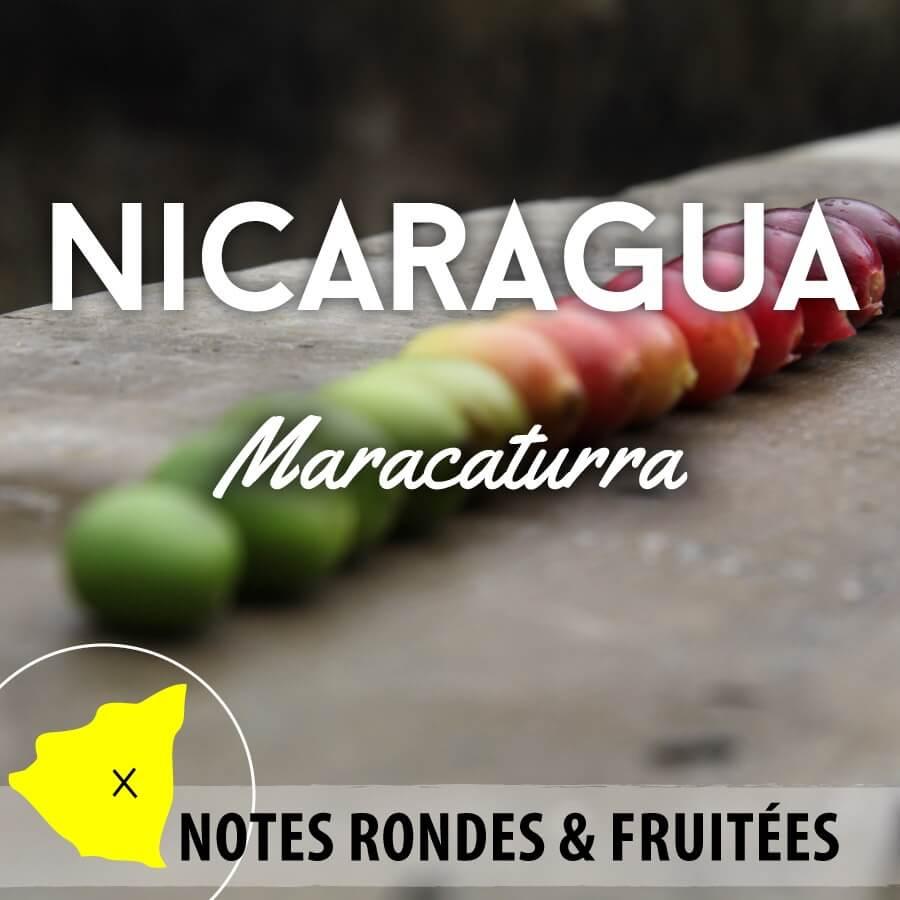 nicaragua maracaturra