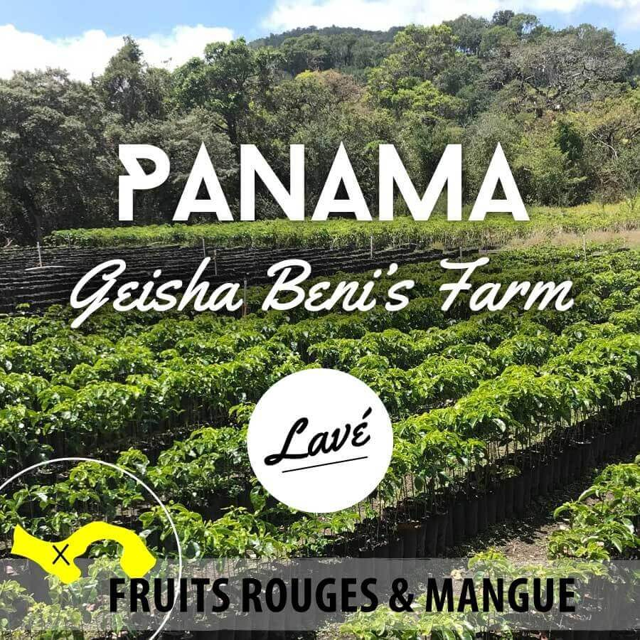 Café en grain Panama lavé - Geisha - Beni's Farm