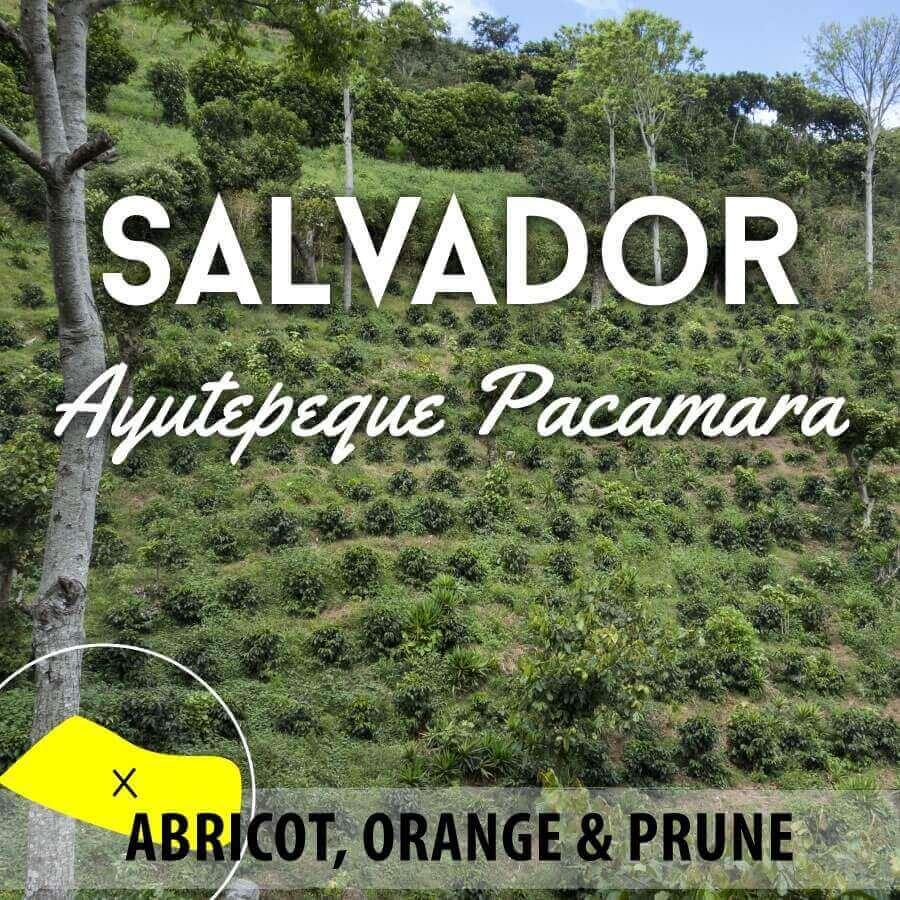 Café en grain SALVADOR Ilamatepec - Ayutepeque - Pacamara