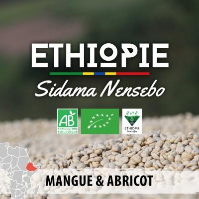 Café en grain BIO Éthiopie - Moka Sidama Nensebo