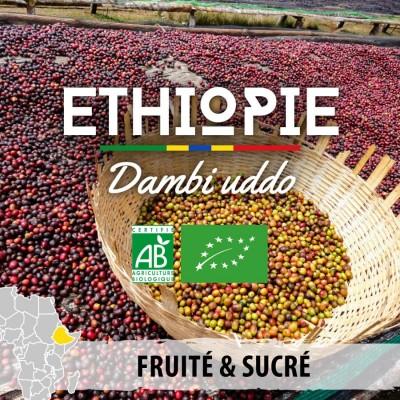 Café en grain BIO ETHIOPIE - Guji - Dambi Uddo