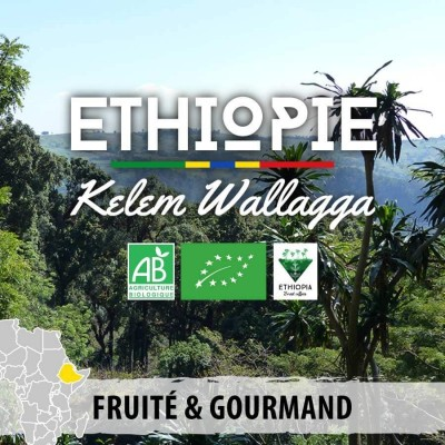Café en grain BIO Ethiopie - Kelem Wallagga
