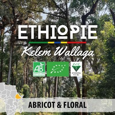 Café en grain BIO Ethiopie - Kelem Wallaga