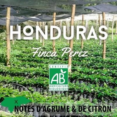 Café en grain BIO - HONDURAS Finca Perez