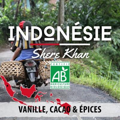 Café en grain Bio Indonésie - Shere Khan