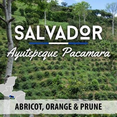 Café en grain Salvador: Ayutepeque Pacamara
